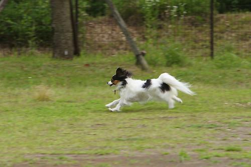 もなかだって、走る時は走るのです! - 無料写真検索fotoq