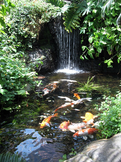 Koi pond and waterfall discovery kingdom flickr photo for Koi pond next to pool