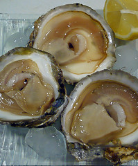 animal(1.0), clam(1.0), molluscs(1.0), shellfish(1.0), oyster(1.0), seafood(1.0), food(1.0), dish(1.0), cockle(1.0), clams, oysters, mussels and scallops(1.0),