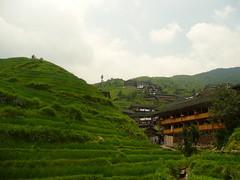 agriculture, village, field, mountain, valley, mountain range, hill, hill station, highland, terrace, landscape, rural area, plantation, mountainous landforms,