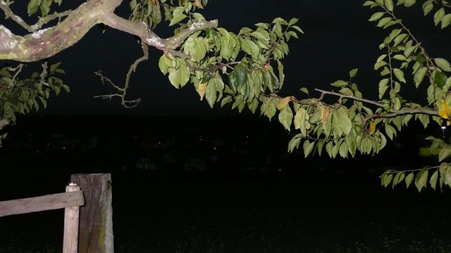Branches by night