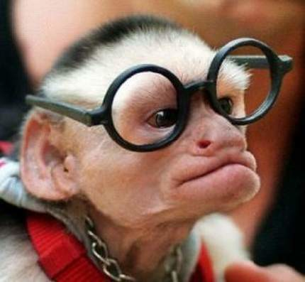 Funny Monkey with Glasses