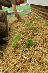 agriculture, straw, plant, mulch,