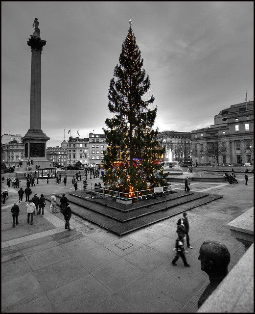 1646 Christmas Tree