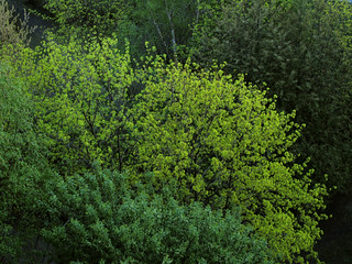 (131/365) Fresh green