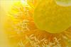 Flower Macro - IMGP0995 Flower Macro: