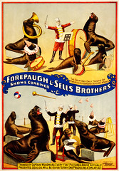 Marvelously trained sea lions & seals, poster for Forepaugh & Sells Brothers, 1899