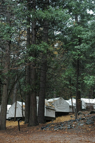 Unheated (cold - no power) white tents, under trees on the hillside, fall, Yosemite National Park, California, USA by Wonderlane