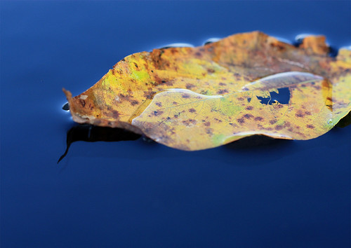 Bathing leaf