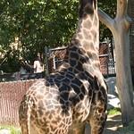 Los Angeles Zoo 051