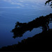 "Cupressus sempervirens f. horizontalis  ""cypress"" by Karl Hauser"