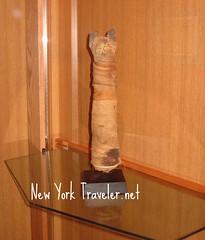 Mummified Egyptian Cat