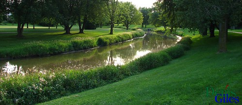 trees reflection tree green water glass grass creek river perspective lush distance denisgiles