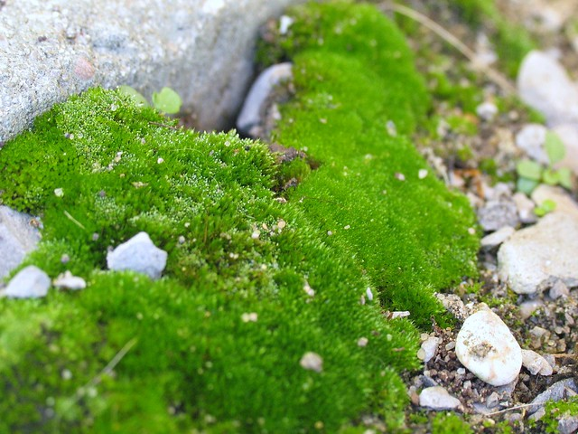 Moss and Pebbles