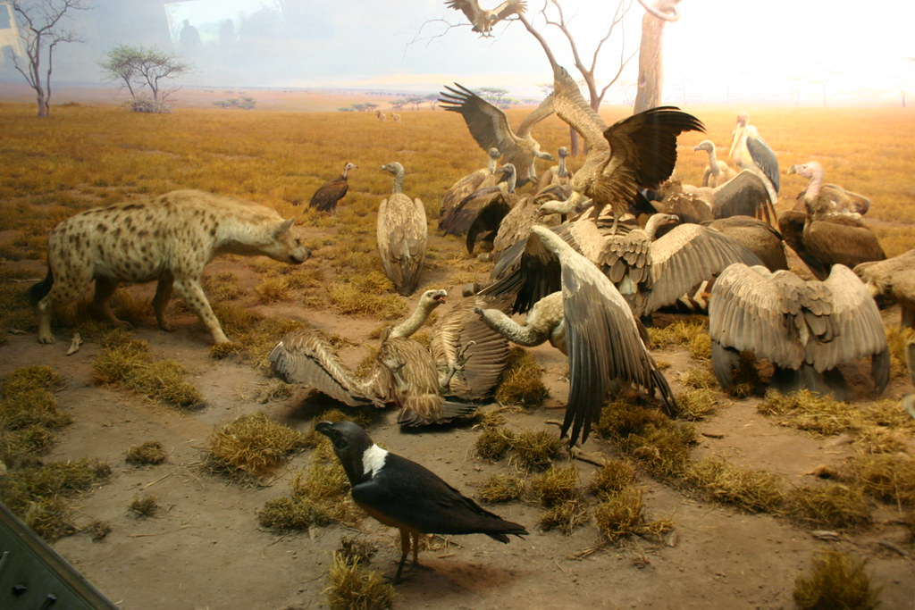 Environment of the Hyena Jackal Vulture Group