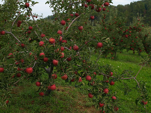 Apples of Adams County, Pennsylvania, USA