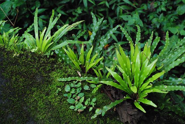 Reserva biológica Bosque Nuboso Monteverde, Costa Rica