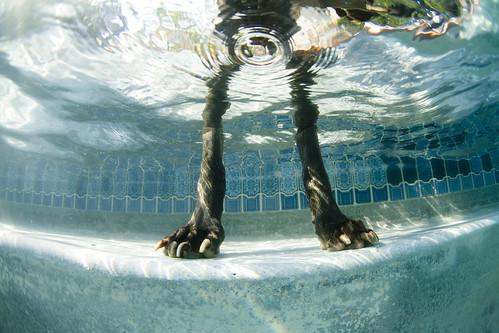 Foto patas de perro en la piscina - Piscinas de patas ...