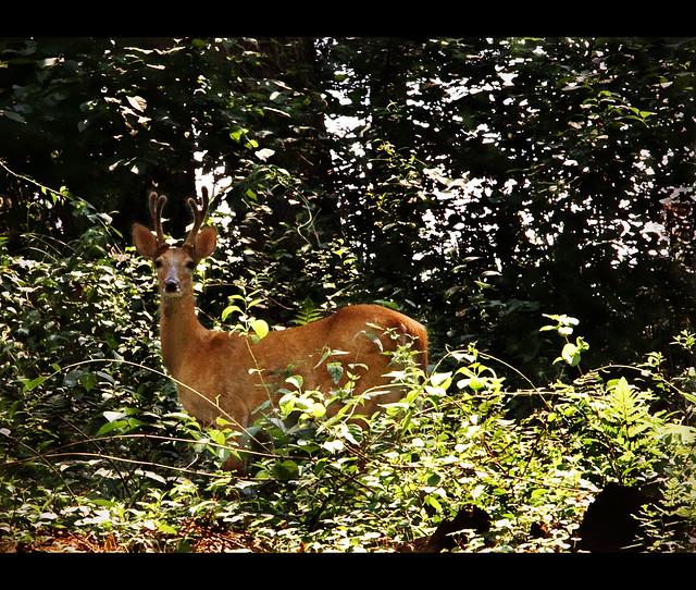 Deer, Oh deer...