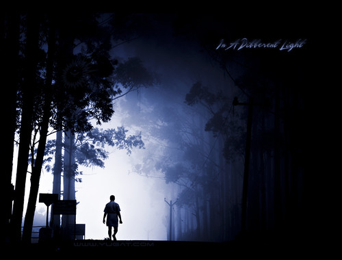 life morning trees winter india mist man silhouette fog walking walk candid mysterious layers incredible tamilnadu kodaikanal exploretop20 artlibre topofthefog infinestyle thesecretlifeoftrees pcamonochrome