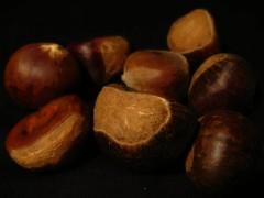 vegetable(0.0), wood(0.0), chestnut(1.0), hazelnut(1.0), produce(1.0), food(1.0),