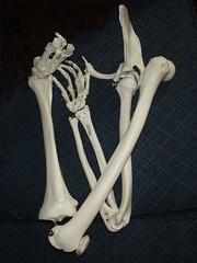 antler(0.0), arm(0.0), skeleton(0.0), leg(0.0), human body(0.0), jaw(0.0), hand(1.0), limb(1.0), bone(1.0),