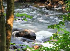 Whippany River Near Frelinghuysen Arboretum