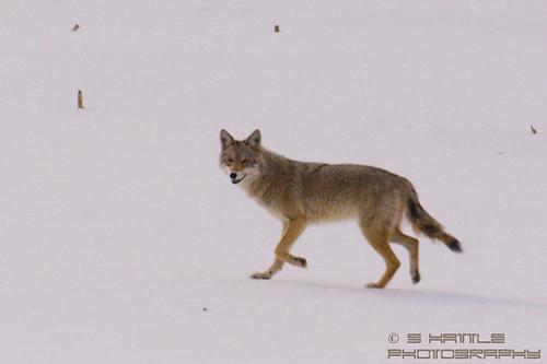 Winter Surroundings by ~Stingrays~