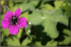 BOTANICAL GARDENS - THE FLOWERS