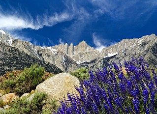 Mt Whitney and Lupine