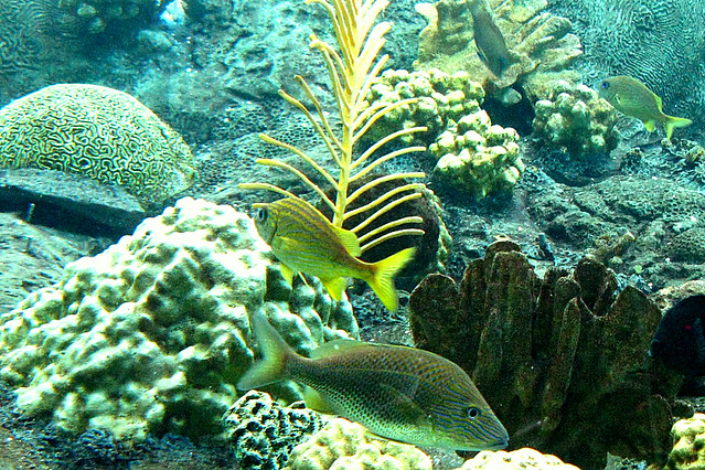 Tropical fish at the florida aquarium flickr photo for Florida freshwater fish pictures
