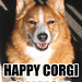 happy-corgi
