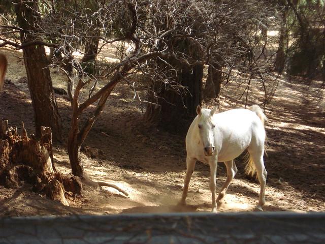 unicorn sighting   Flickr - Photo Sharing!  unicorn sightin...