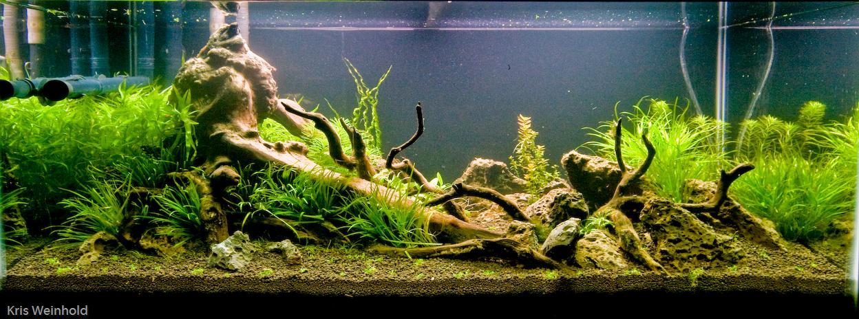 50g First Planting Guitarfish