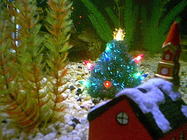 Archive christmas fish 2000 my brother richard made a smal flickr photo sharing - Fish tank christmas decorations ...