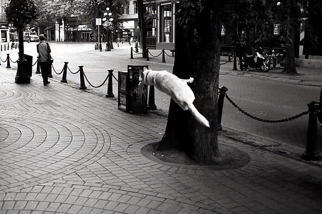 Moesgård Museum, Aarhus, Denmark - Fantastic Black and White Street Photographs