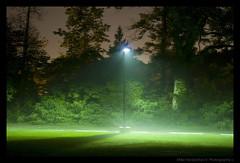 Night Mist - Cranbrook