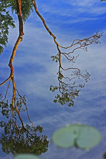 ~The Hangin Tree~ A Reflection Of...