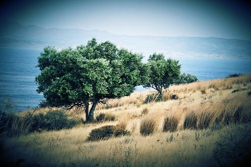sea summer flickr wind creta greece lv olivetrees mesara agiagalini sopata
