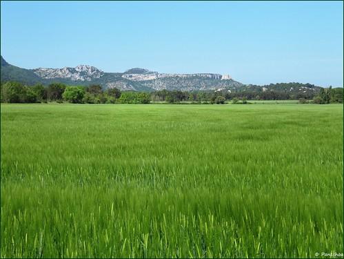 saintebaume montagne mountain hostellerie champ vert campo verde field green provence var france blé trigo corn pantchoa françoisdenodrest