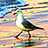 the *Fat Bee & Dancing Gull* (Invite Only) group icon