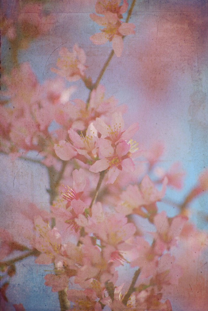 pink flowes with texture