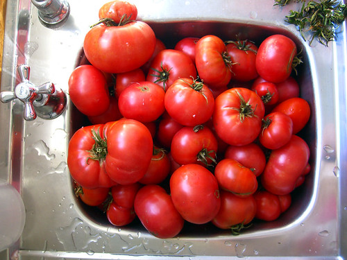 The tomatoes, ready to go
