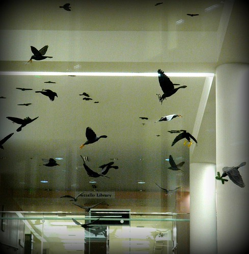 The crows inside Kenneth S. Allen Library by Wonderlane