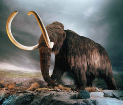 horn(0.0), muskox(0.0), animal(1.0), elephants and mammoths(1.0), mammoth(1.0), fauna(1.0), wildlife(1.0),