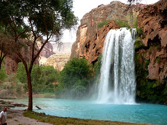 Pastoral scene at Havasu Falls, visibly in the Grand Canyon