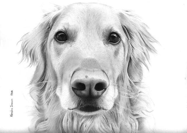 Good Looking Dog Breeds