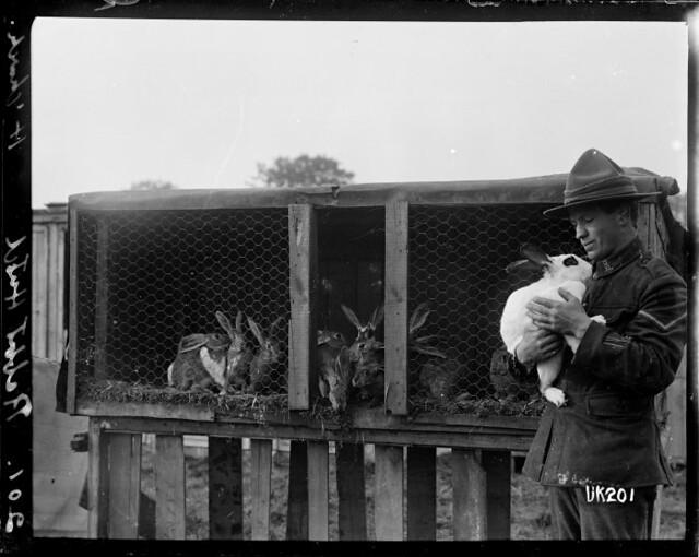 A rabbit hutch at Hornchurch Convalescent Camp