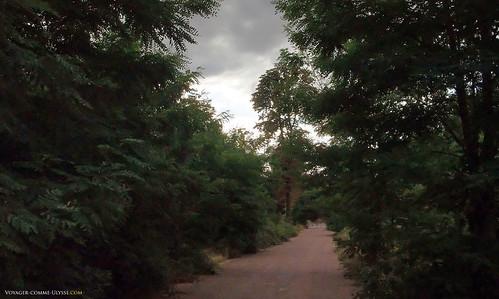 Les routes du bois se prêtent au footing parisien :D