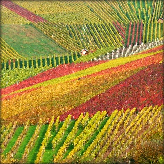 House nestled in Vineyard - Fall Nature, Germany